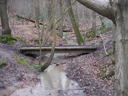 Wormleybury Brook, Wormley Wood