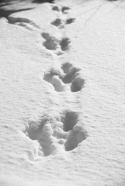 Winter_February_2016-12