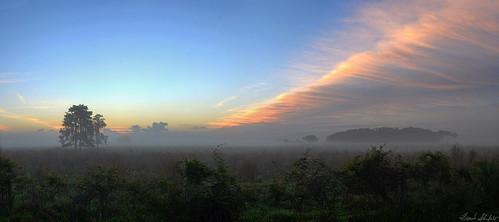 usa nature fog sunrise landscape dawn florida northamerica tranquil sounds howls wma hoots wildlifemanagementarea hendrycounty dinnerislandranch april2016 635372