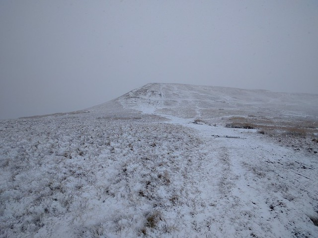 Lord Hereford's Snowy Knob #sh