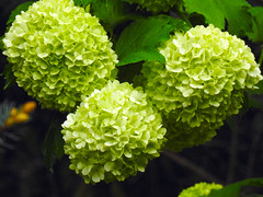 Green Spring Bloom