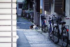Today's Cat@2016-04-25