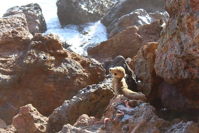 Baby Sea Lion UnWell :(