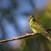 Green Bee Eater by m_bhakt