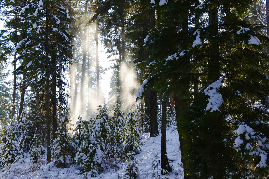 Snow shower from the trees