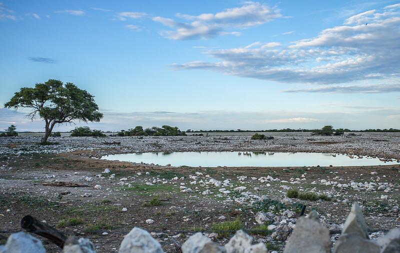 Water hole in Okaukuejo