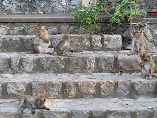 La campagne de Battambang: les singes de Phnom Sampeu