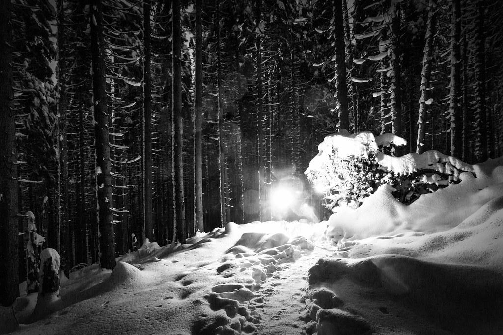 Lichter im dunklen Wald