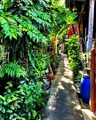 #moobaan walkway - loving the little alleyways in this local #thai neighborhood #bangkok