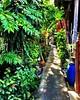 #moobaan walkway - loving the little alleyways in this local #thai neighborhood #bangkok