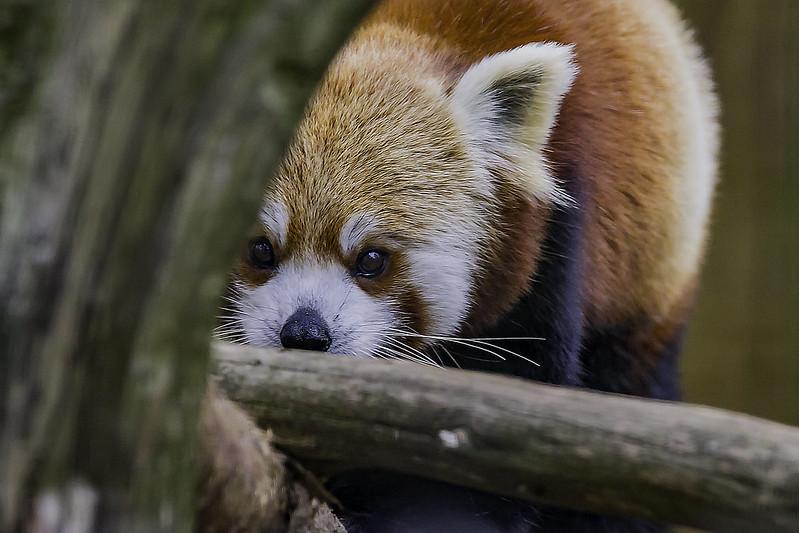 Fotos de animales de todo tipo incluyendo mascotas que más te gustan - Página 4 25155847226_554fde8d25_c
