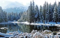 Time of Reflection, Tioga Lake, Yosemite 5-15
