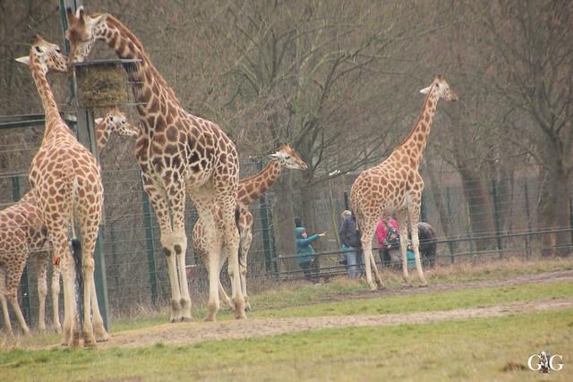 Nieselregen im Tierpark Friedrichsfelde 25.03.2016114