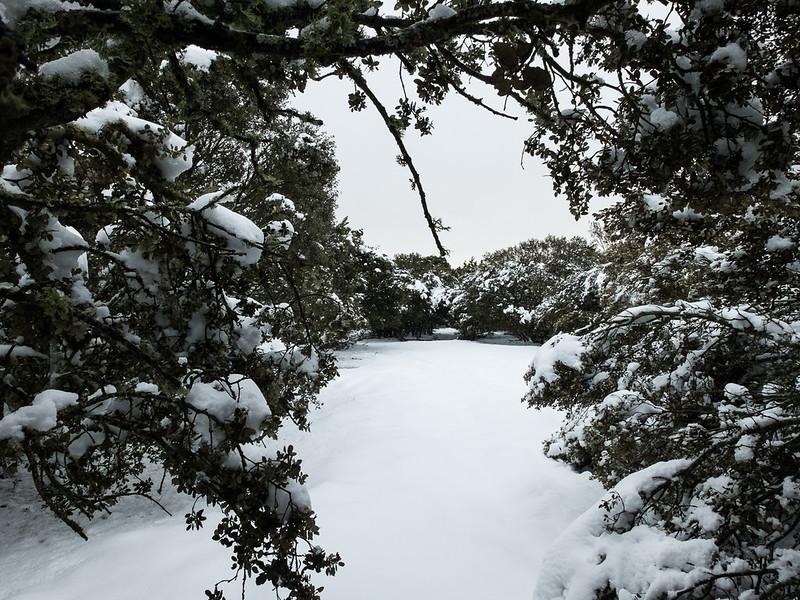 Encinas nevadas