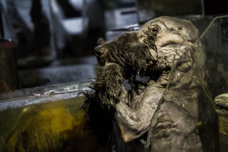驚魂比利時「廢棄獸醫學院」福馬林的怪誕美學10