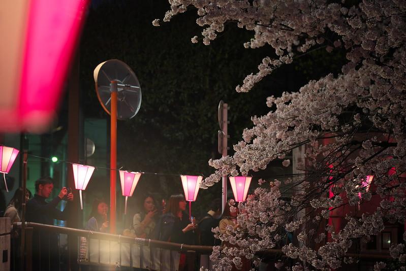 目黒川の桜 2016年3月31日