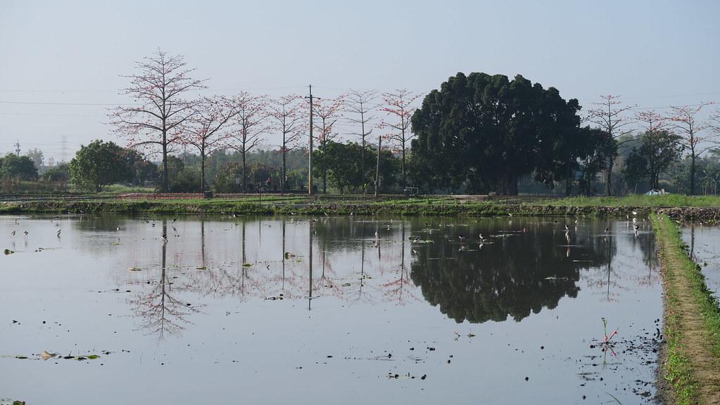 白河初林埤 (2)