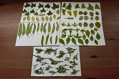 Pressed & Sealed Leaves, Batch 2