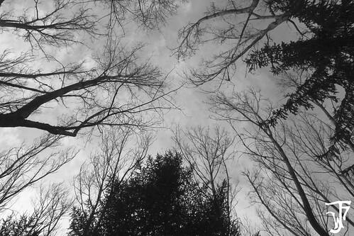Clamando al cielo