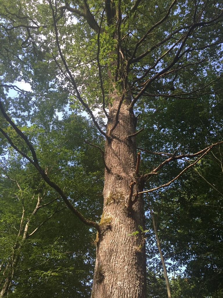 Bois De La Saulx photo tremont-sur-saulx : photos pictures trémont-sur-saulx