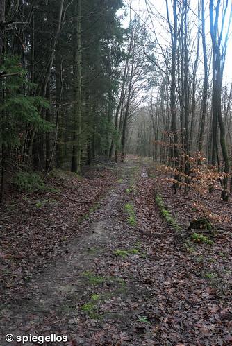Trailrun-34