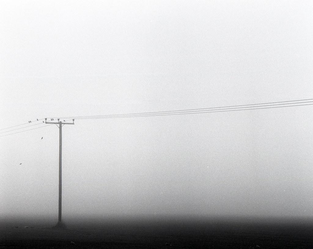 Fog and Birds