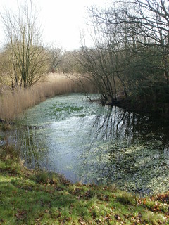 Epping Forest pond grasses
