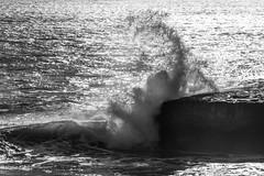 Waves 2016