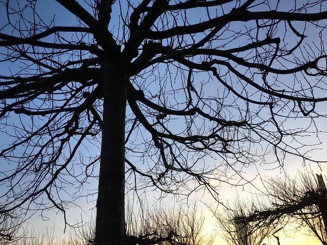 Silhouette eines Baums bei Sonnenuntergang mit verzweigten Ästen Ast Nature Bäume Baum Ohne Laub Berühren Ineinander Ineinandergreifend Verschlungen Dunkel Silhouette Kontur Hintergrund Verziert Wachstum Holz Zweig Biegung Jahreszeit Himmel Blau Sonnenlic