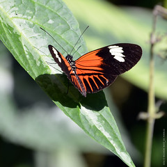 Butterflies Show