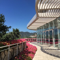 What should you do for a day in LA when you're between flights?   Go to the Getty where it's bright, serene and beautiful.  #thegettycenter #modernarchitecture #feelthesunshine