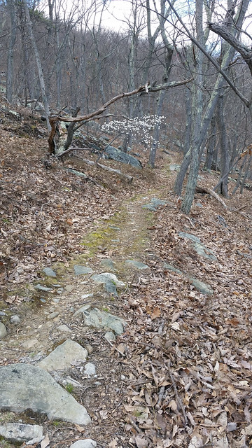 20160402_Cacapon_State_Park_033