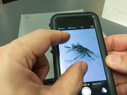 iPhone macro photo tips: Fix focus, adjust exposure, zoom