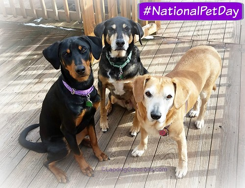 It's National Pet Day 2016 #RescuedDogs #AdoptDontShop #Doberman #Hound #LapdogCreations ©LapdogCreations