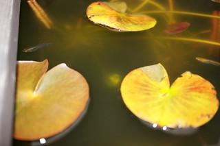 Photo:DSC04268 By:舞桜