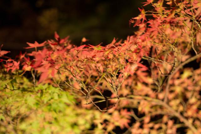20141122-武奈ヶ岳&京都ライトアップ-0831.jpg