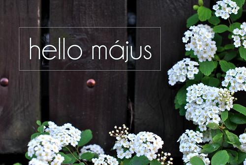 hello_majus2016