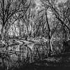 River's Edge via Pinhole