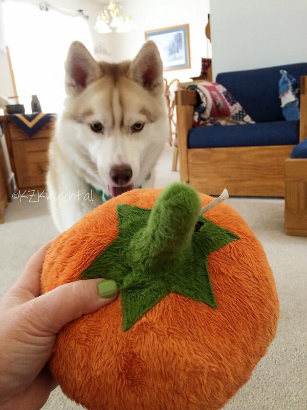 IMG_6296MagsPumpkin