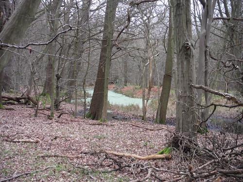 Long Pond, Westfield Grove