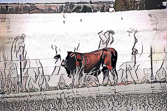 cow 7
