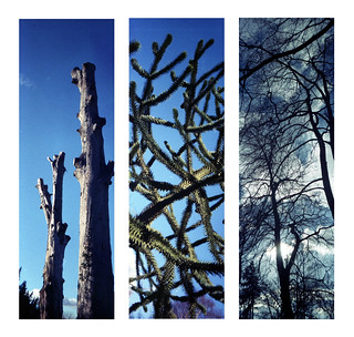 Hodsock Priory Trees