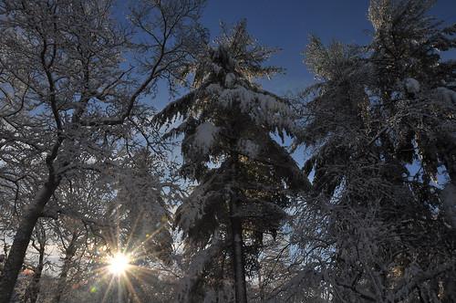 winter snow sunrise