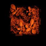 Arabidopsis in VIS and IR images