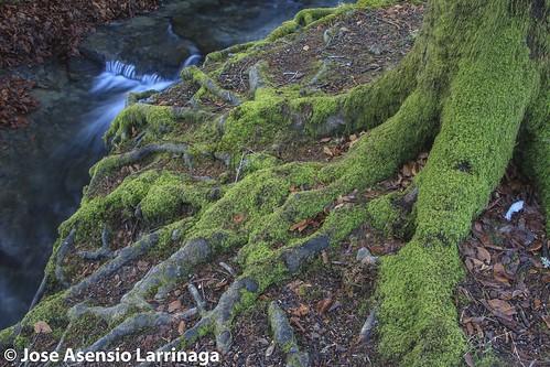Parque Natural de Gorbeia  #DePaseoConLarri #Flickr -3059