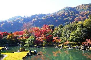 Tenryu-ji, Sogenchi Teien (Garden) -2 (November 2008)