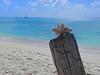 GrandTurk.BeachShell