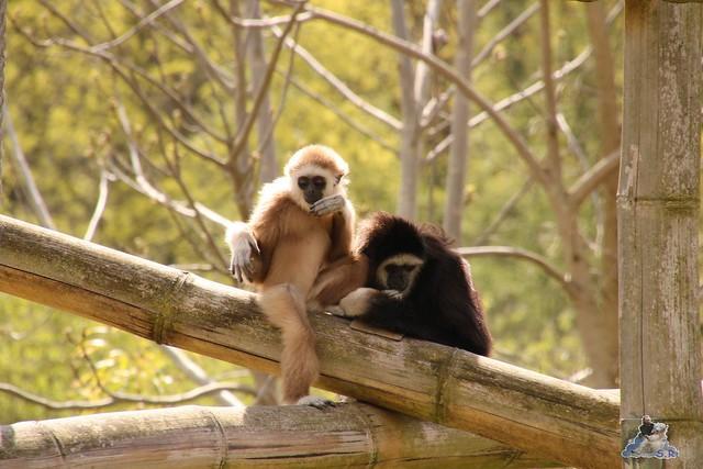 Tierpark Berlin 17.04.2016  0108