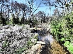 Brookside Preserve - Spring 2016 (37)