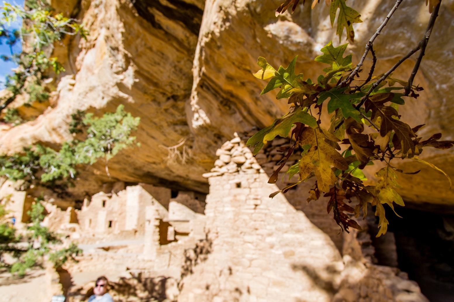 Mesa Verde-7160